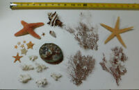 Mixed Starfish, Coral, Dried Sea life Shells Craft collector Decor Lot # 36-L