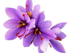20 Fresh Saffron Crocus Corms - Crocus Sativus - May 2019 Harvest