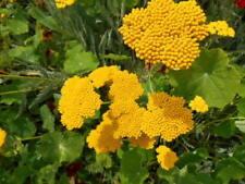 Summer Sand Dry Climate Light Watering Plants & Seedlings