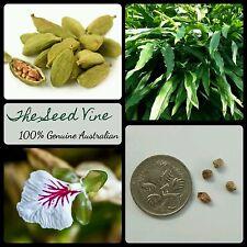 20+ GREEN CARDAMOM SEEDS (Elettaria cardamomum) Indian Tropical Edible Spice