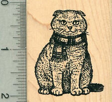Scottish Fold Rubber Stamp, Cat in Scarf H34114 Wm