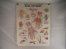 Vintage 1988 Mes Hand Wrist Medical Anatomical Chart Diagram Plastic Laminated