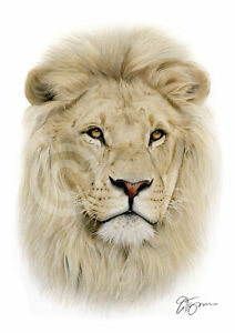 AFRICAN LION colour pencil print A4 / A3 signed by artist Animals Realism