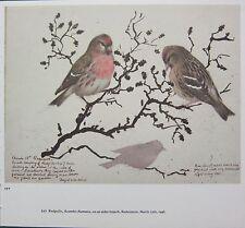 BEAUTIFUL VINTAGE BIRD PRINT ~ REDPOLLS ON ALDER BRANCH
