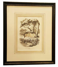 Framed Antique Print - Domestic Pig. Cochon Domestique 1849 walnut splined frame