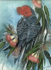 """Original Watercolour On Board By Gayle Russell """"Gang Gang Cockatoo"""""""
