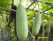 10 Graines Loofah Cylindrica, Sponge gourd, Luffa aegyptiaca Seeds