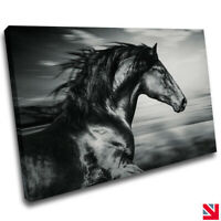 HORSE GREYSCALE ANIMAL STALLION CANVAS Wall Art Picture Print