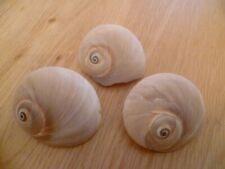 3 Small Sea Shells ~ Decorative / Ornament Arts & Craft