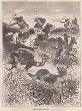 C3175 America Meridionale - Caccia al Guanaco - Xilografia - 1878 old engraving