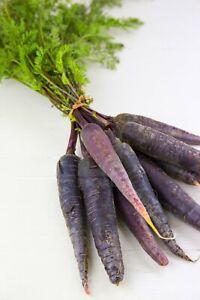 purple carrot Carrot  50 seeds