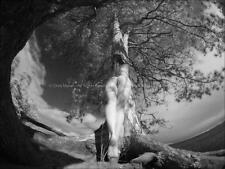 9102-LP BW IR Fine Art Nude Tree of Life Naked Nature  18x24 Print Signed Maher