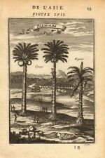 CELEBES SULAWESI. Coconut & fig trees. East Indies'Palmiers'. MALLET 1683
