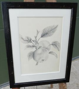 Antique Framed Pencil Drawing Picture of Apples Tree Branch