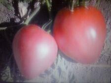 Pomodoro cuore di bue, 50 semi, originale, puro, seeds, Beefsteak tomato