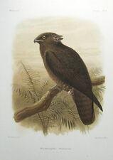 BAT KITE, KEULEMANS original antique print c1875