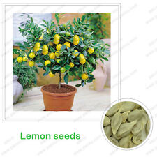 100 Pcs / Bag, Green Yellow Lemon 100% True seed