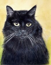 New listing Black Cat Long Hair Giclee Art Print from Watercolor & Color Pencil by P.Tarlow