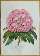 van Houtte Garden Flowers Large Print Rhododendron from Nepal 1855 (NS)