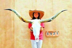 "STEER SKULL LONG HORNS MOUNTED 5' 0"" COW BULL TAXIDERMY LONGHORN H6521"