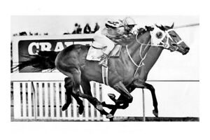 HYPERNO - 1979 Melbourne Cup winner modern Digital Photo Postcard