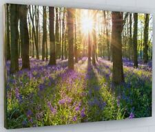 BLUEBELL WOODS WOODLAND CANVAS PICTURE PRINT WALL ART CHUNKY FRAME LARGE 111-2