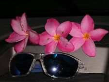 """(1) 5-8"""" Rooted Plumeria Frangipani seedling Buy two of these get one free"""