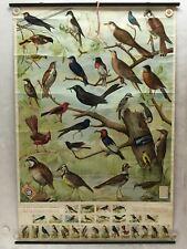 Useful Birds of America Advertising Store Display Poster Arm & Hammer J5