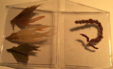 Ancient Peru Nasca = Feather Cape Restoration Project . Parrot Feathers + Twine