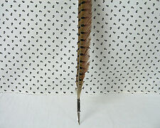 Pheasant Quill Feather Calligraphy Dip Ink Nib Vintage Look Extra Long  21.25""