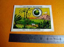 CHROMO 1939 CASINO LES FRUITS EXOTIQUES N°154 CALEBASSE