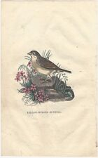 1842 American Hand-Colored Woodcut of a Yellow-Winged Bunting Bird