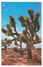 CA Desert Joshua Tree Forest Josef Muench Photo Vintage Postcard