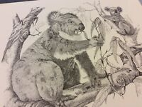 Vintage Book Print - Koala Bears - Greg Turner