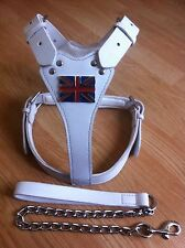 WHITE STAFFORDSHIRE BULL TERRIERENGLISH BULL TERRIER HARNESS WITH LEAD