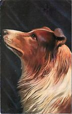 1907-15 Printed Art Postcard Tucks Dogs Series 9181 Rough Coat Collie, Posted