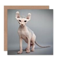 Sphynx Cat Bald Blank Greeting Card With Envelope