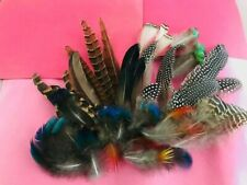 35 assorted Feathers from Peacock,Red golden pheasant & Guinea fowl for $8.99