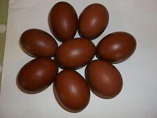 Blue French Maran large fowl hatching eggs x6