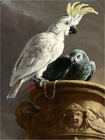 Oil painting Melchior d'Hondecoeter - The Menagerie nice birds parrots canvas