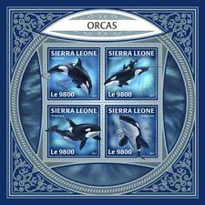 SIERRA LEONE fauna flora Orcas S201801