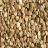 "Buckwheat Seeds "" Excellent Deer Or Turkey Food Plot "" 1 Lb."