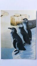 Postcard  Penguins at The New Colchester Zoo Essex Animal Postcard