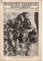 1919 Scientific American Supp August 16 - HONEYBEES; EVOLUTION AND SEXUALITY