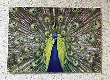 Peacock - 3 x Greeting Cards (free delivery)
