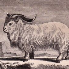 Gravure XVIIIe Bouc de JUDA Buffon Corne Saïga Goat 1790