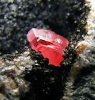 RHODOCHROSITE GEMMY RED TWIN CRYSTAL on BLACK MANGANNESE MATRIX from PERU