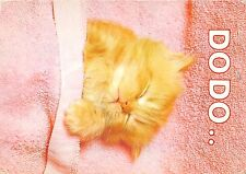 B70318 animals animaux chat cat Dodo