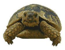 "Tortoise Counted Cross Stitch Kit 11.5"" x 8.75"" A2317"