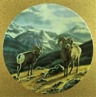 GRAND VIEW: JASPER RAMS Plate Portraits of the Wild #5 Paul Krapf Bighorn Sheep
